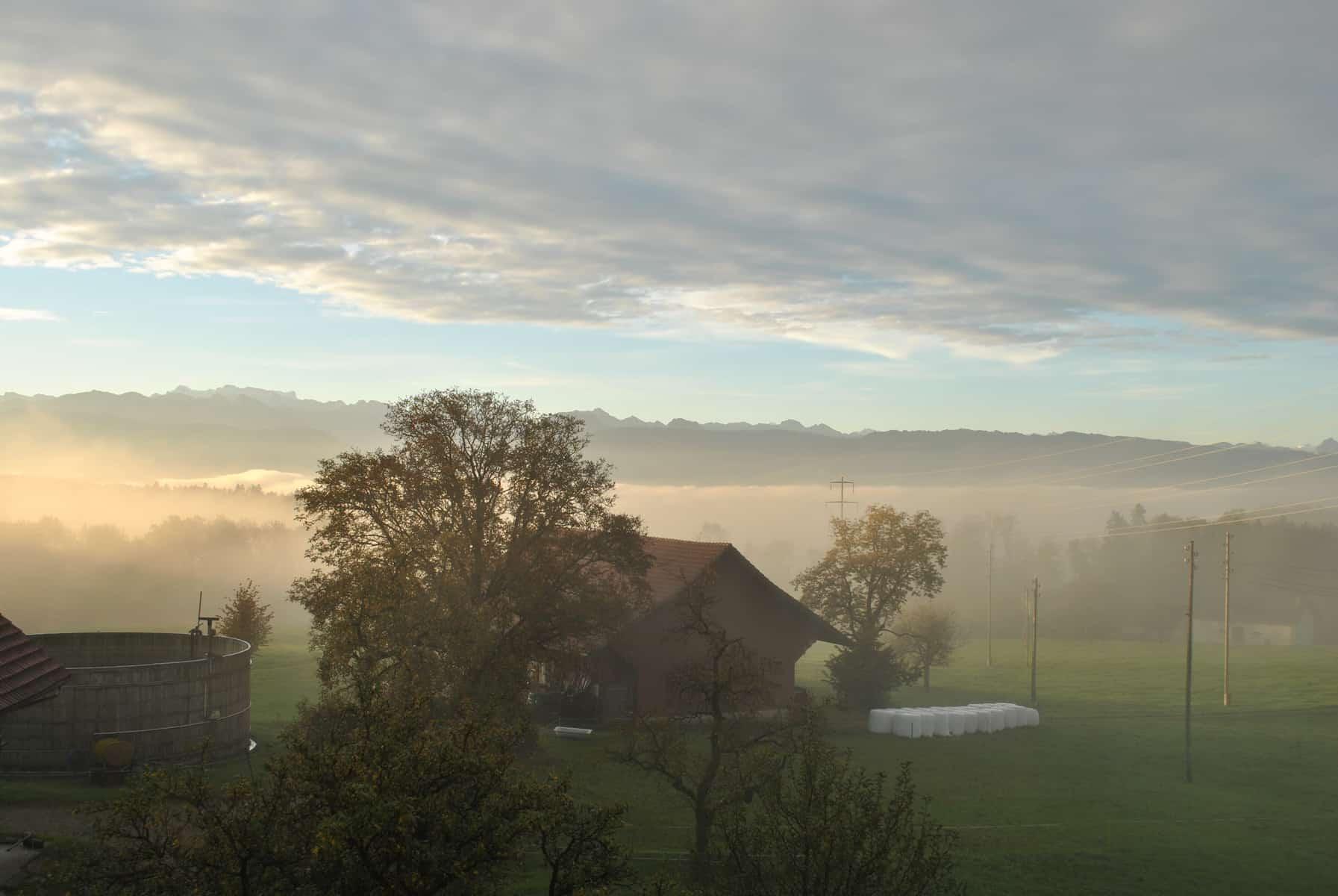 Morgenstimmung Bauernhof Birch5