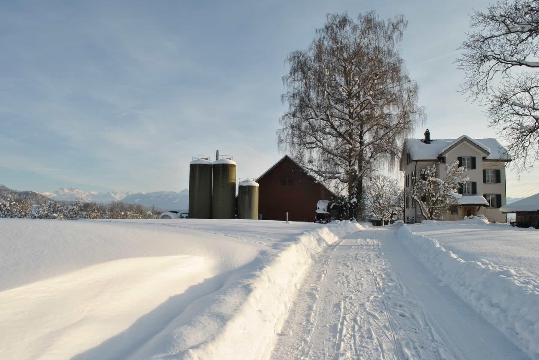 Winter Birch5 Bauernhof