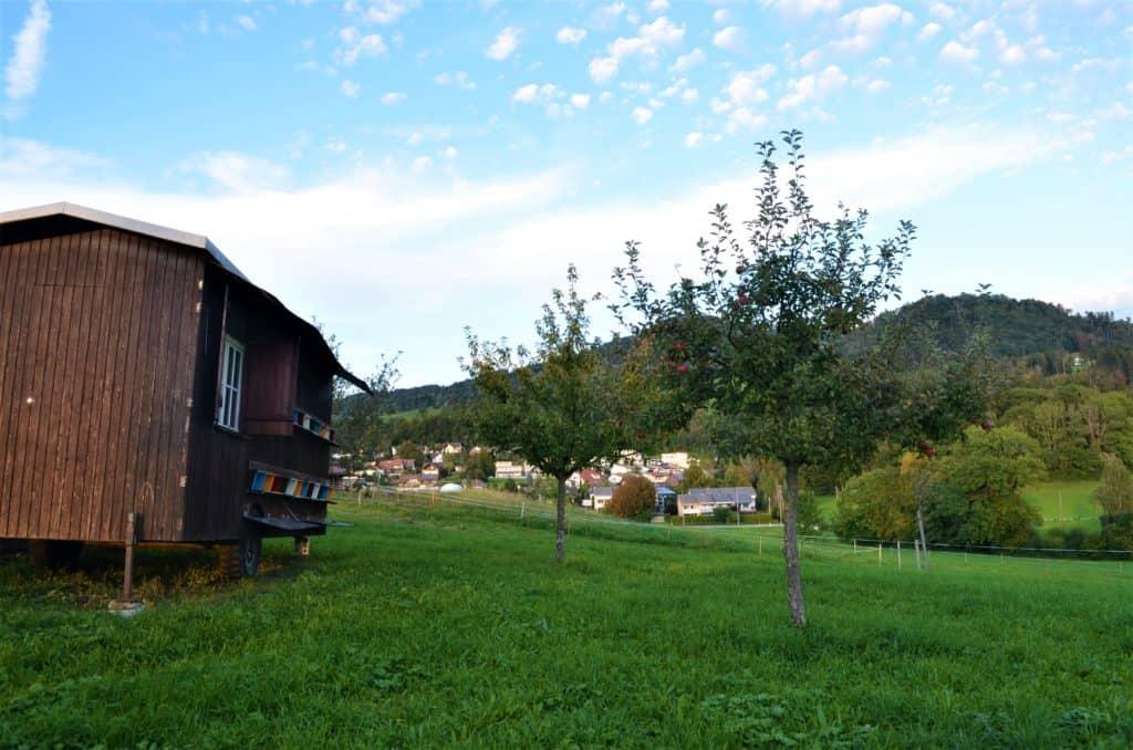 Obstgarten Birch5