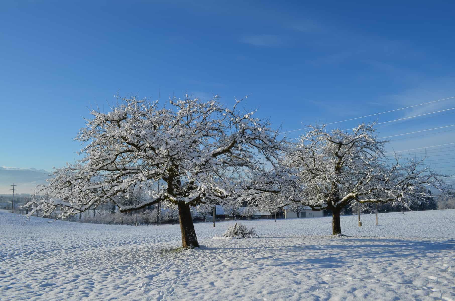 Winterstimmung auf der Birch5